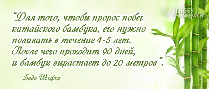 Для того, чтобы пророс побег китайского бамбука, его нужно поливать в течение 4-5 лет. После чего проходит 90 дней, и бамбук вырастает до 20 метров